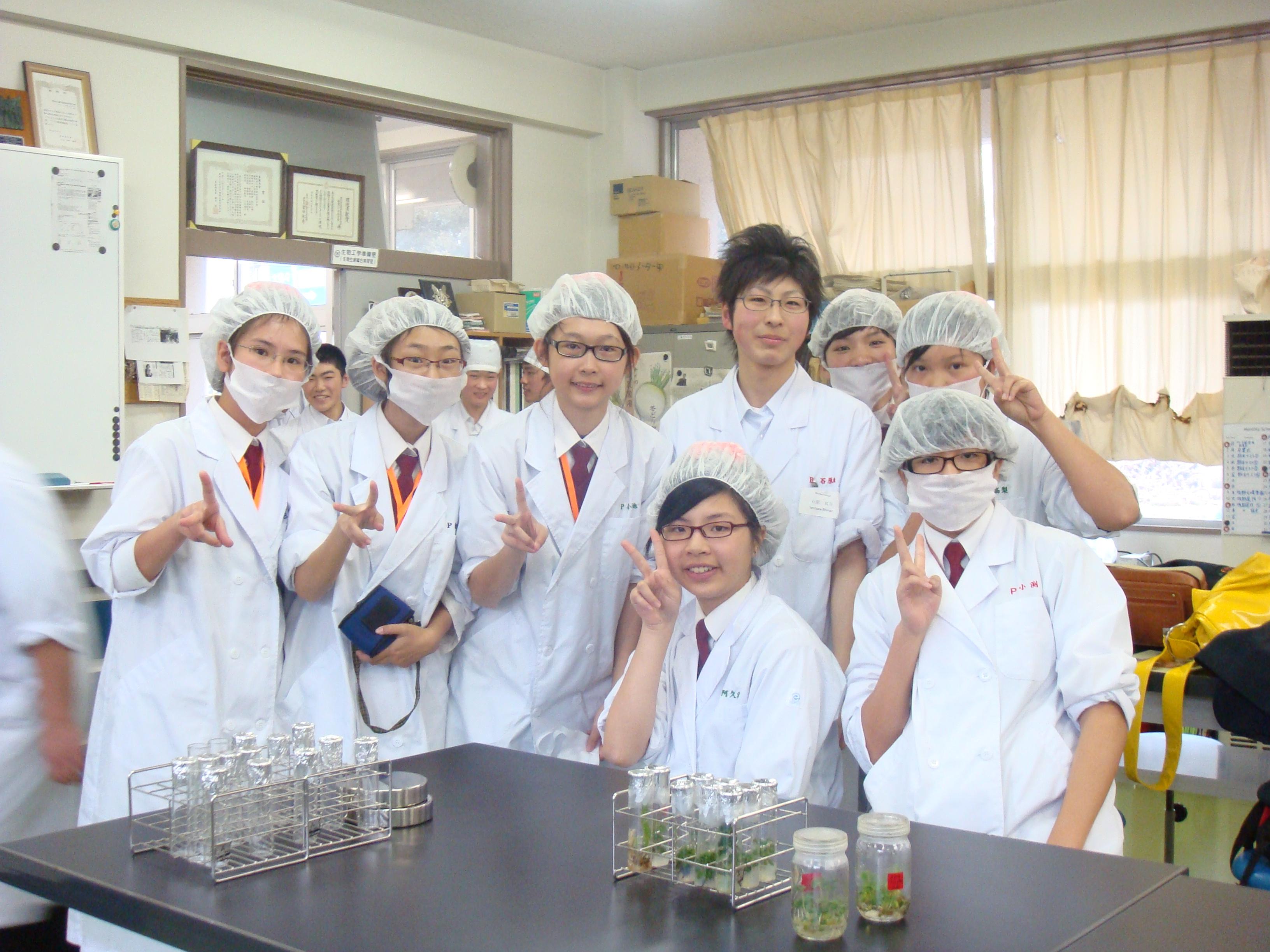分組活動-地瓜櫻草的增植培養