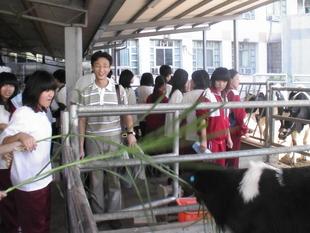 參觀畜保科農場